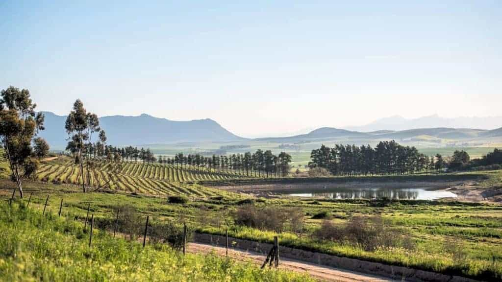 Lammershoek Wines Swartland South Africa