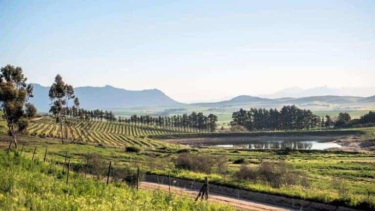 Lammershoek Wines Swartland South Africa